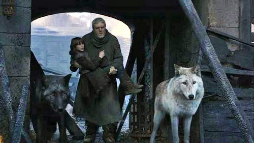 Summer-and-Shaggydog-game-of-thrones-direwolves-31109701-500-281